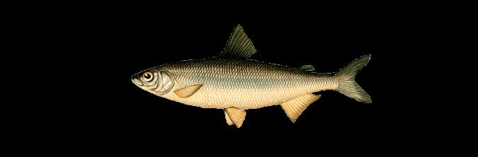 tugun ru рыболовный