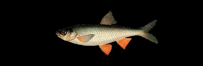 рыбалка чибак