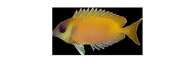 вилообразное рыболовное