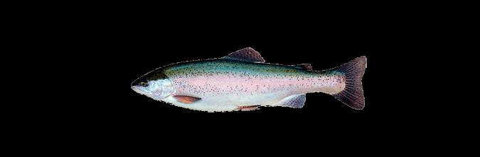 номерные знаки, рыбы сибири и дальнего востока с картинками вашим
