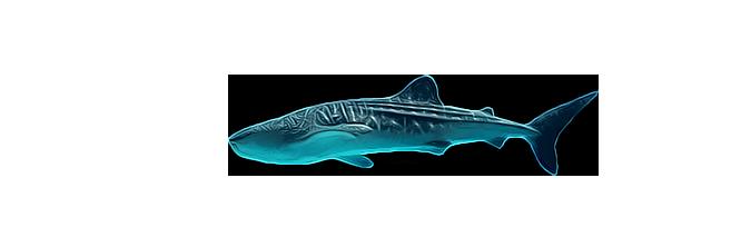 Китова Акула Реферат