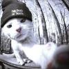 sasha kotov